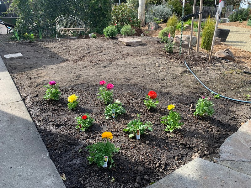 Yard Transformation Spring 2021