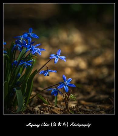 Unknown flower-1