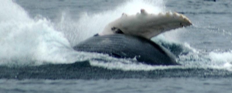 whale crashes.JPG