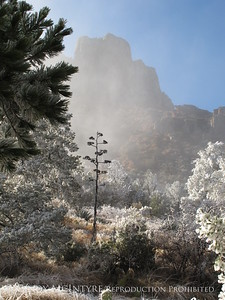 Ice Fog in Chisos