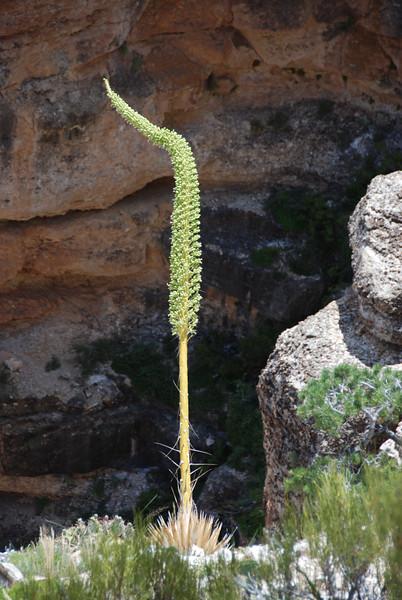 Grand Canyon Day 1DSC_1791-20.jpg