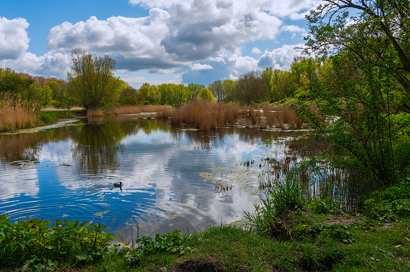Near the pond