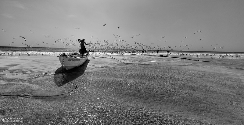 Sardine Season (10)- Dhofar.jpg