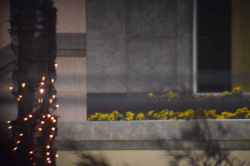 Day 10 Sniping from cover... This was the first attempt at telescoping. These flowers are in the windows of Hotel on Boulevard (Day 2). No attachments, just focus the 18-55 lens onto the eyepiece of the spotting scope.