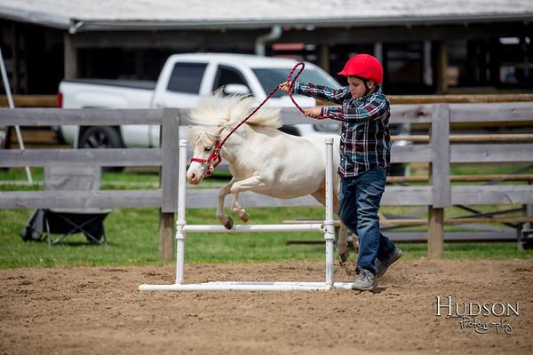 32. Mini Horse Jumping