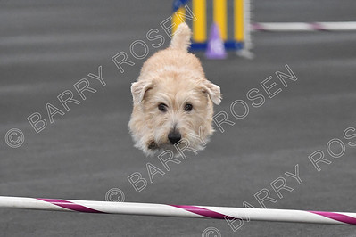 TMAC AKC Agility Trial, February 22-23, 2020