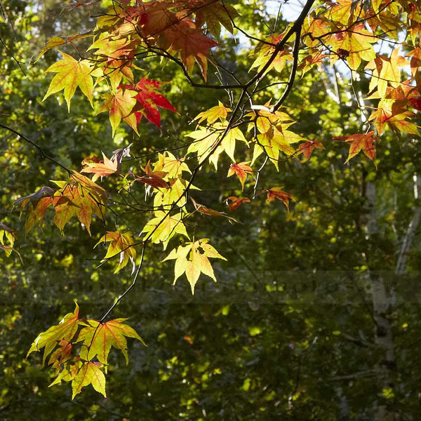 Autumn at Colby Lodge