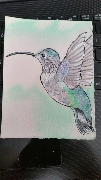 Claire's Hummingbird July 2018