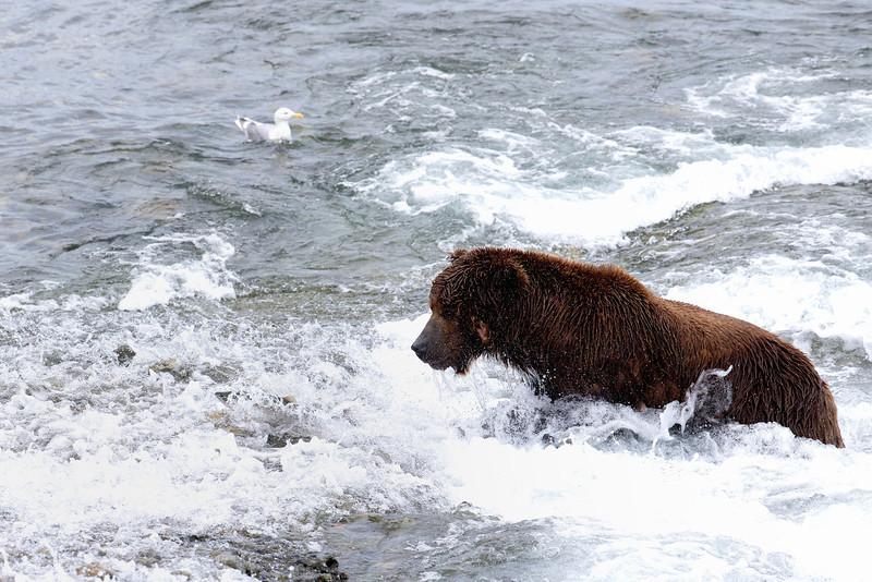 Alaska_2013_FH0T5127.jpg