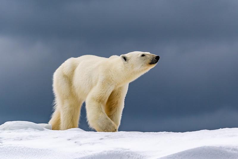 May - Svalbard