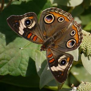 Butterfly Kiosk