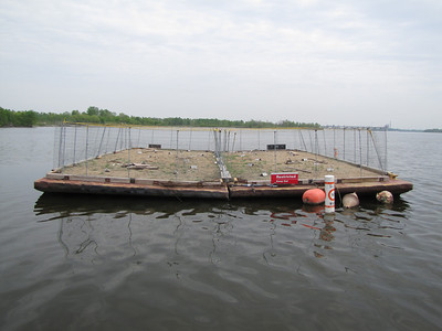 2012 Endangered Interior Least Tern Nesting Barge Project