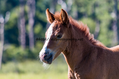 Butterfly Kisses' Filly