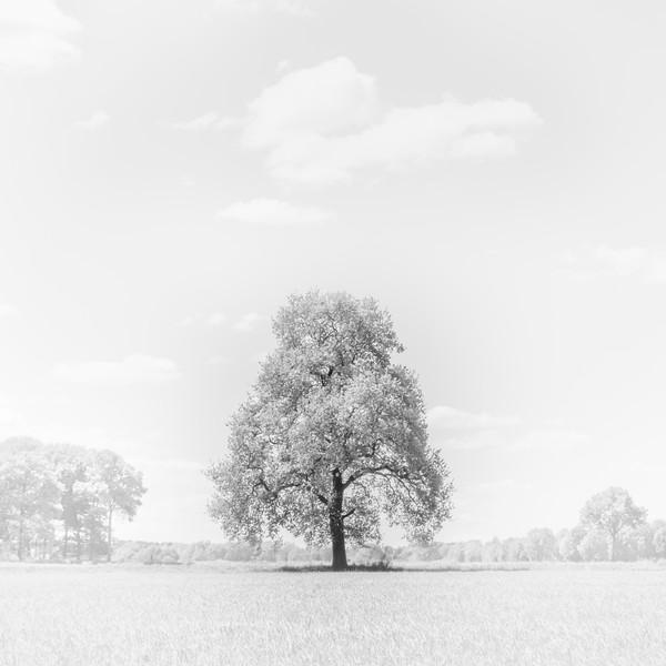 Biesemans_Robert_landscape_1.jpg