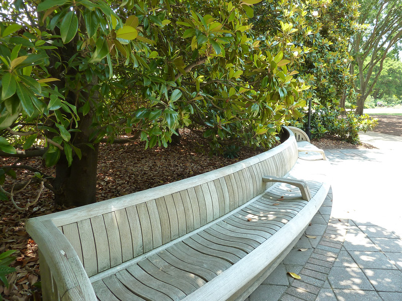 I sat on this bench in the shade of the towering magnolia trees, enjoying the fragrance of the giant blossoms.