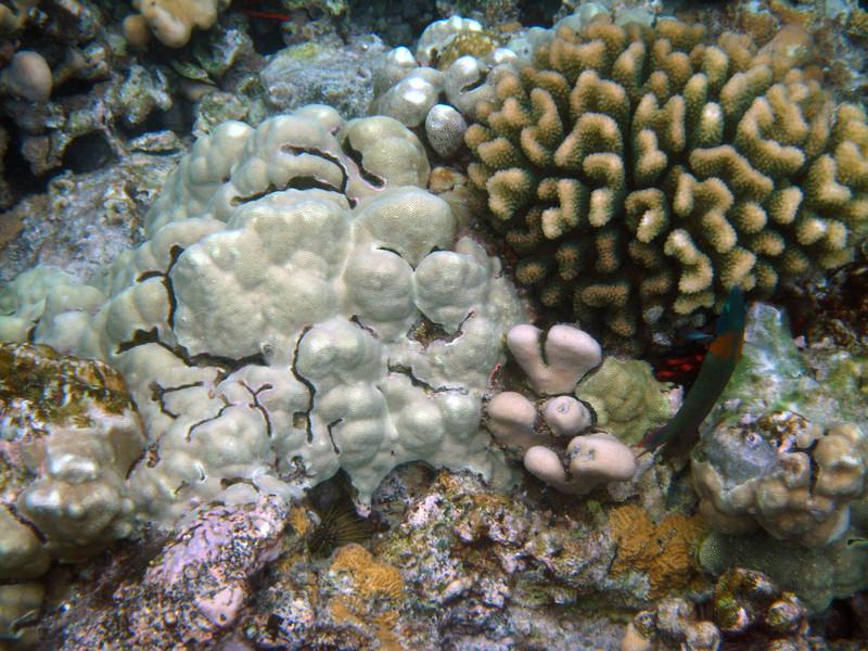 465- 20080416- Hawaii 20-Snorkelling IMG_0656.jpg