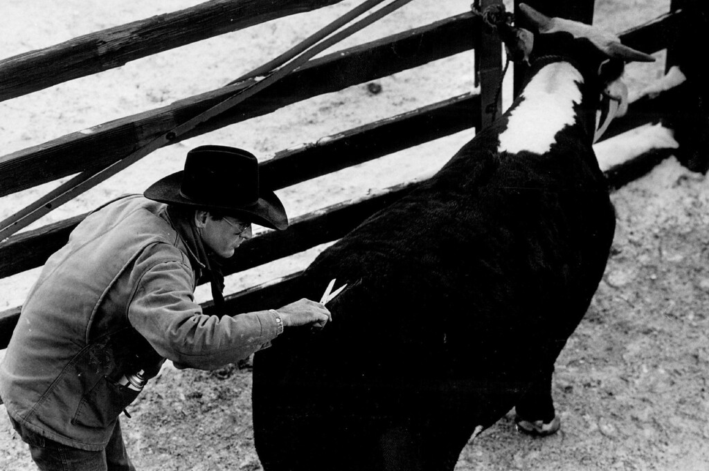 . National Western Stock Show, 1987. Denver Post Library photo archive