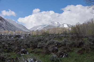 2014 Aspen