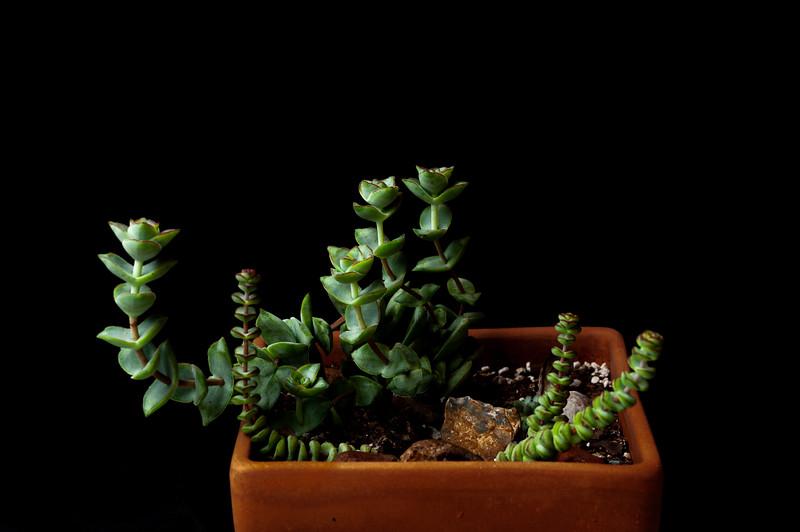 succulents 051620-3174.jpg