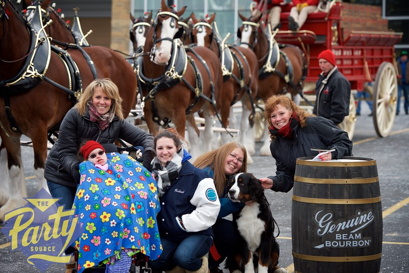Clydesdale Portraits 69.jpg