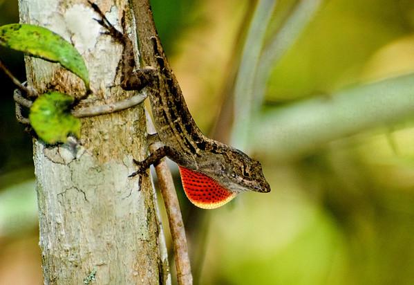 SWFL- Wild Florida, Birds & Wildlife.