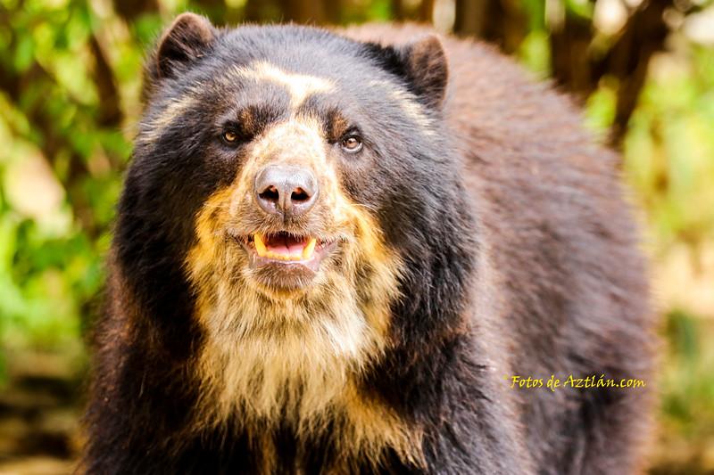 Bear IMG_1738.jpg