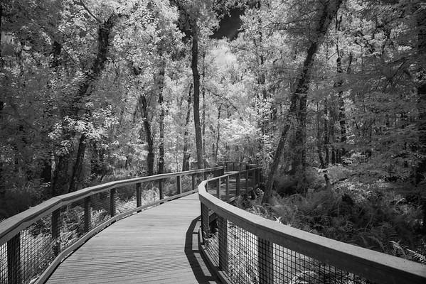Brooker Creek Preserve - Tarpon Springs, FL