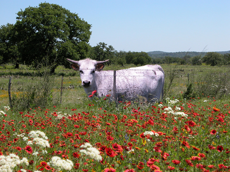 White cow red flowers combo copy 2.jpg