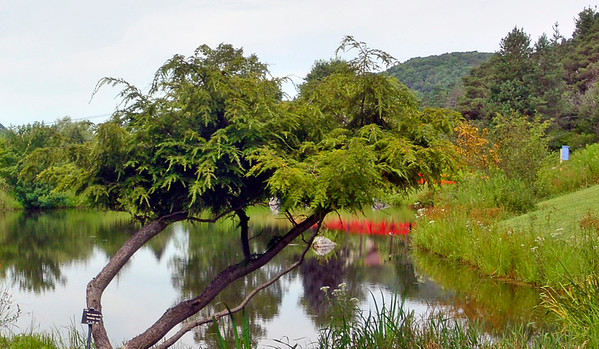 Nannen Arboretum
