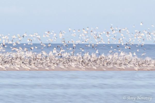 Birds as a Blur