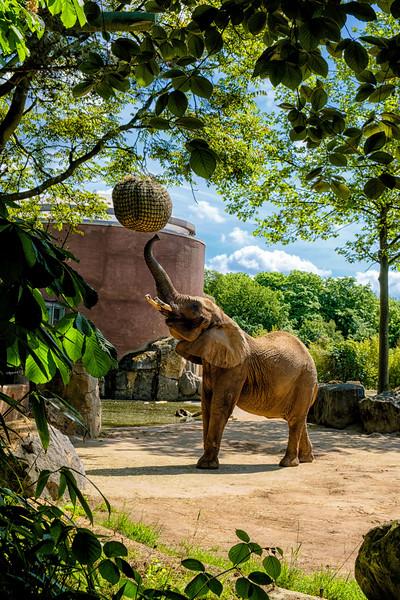 Zoo Duisberg_21 mei 2017_DSCF9280-bewerkt.jpg