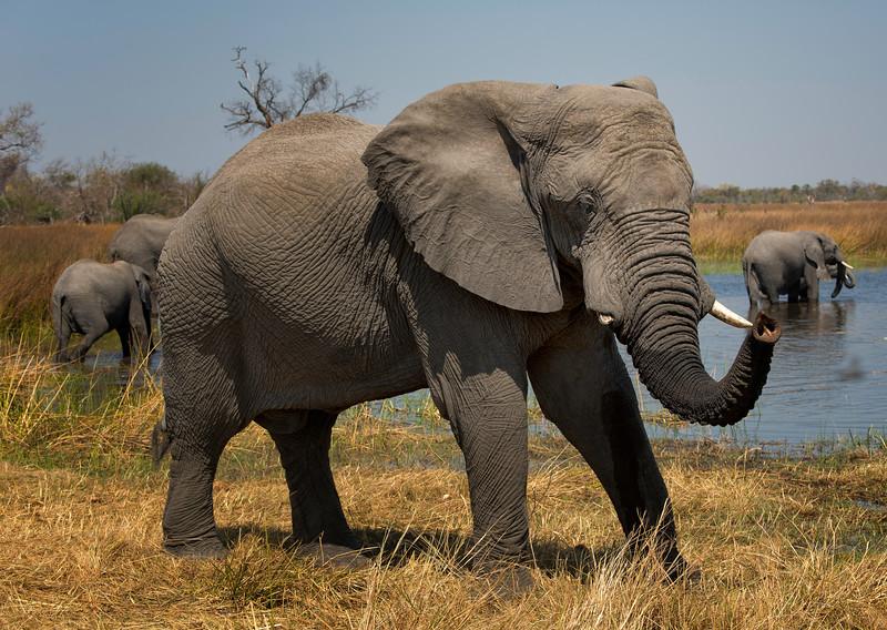 2014-08Aug-Okavango Masters-73-Edit.jpg