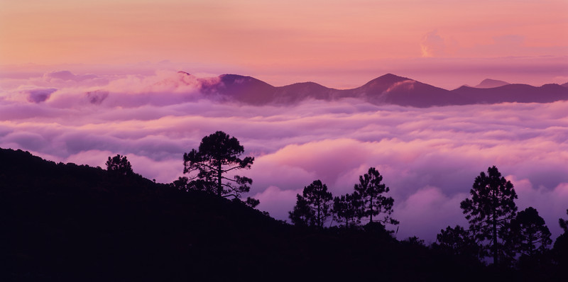 Tamaulipas, Mexico / Sunrise lights the fog layers filtering between the Sierra Madre Oriental with silhouetted pines in the foreground. 1003P3