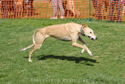 2007 West Coast Greyhound Gathering, Solvang, CA