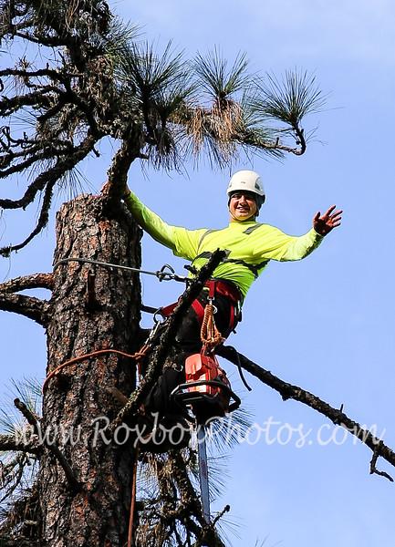 Twin Cities Tree Sevice