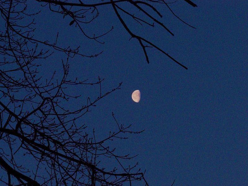 Early morning moon 3-05-2010