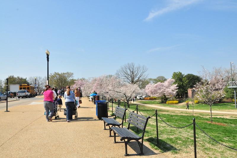 Cherry Blossoms 2014 013.jpg