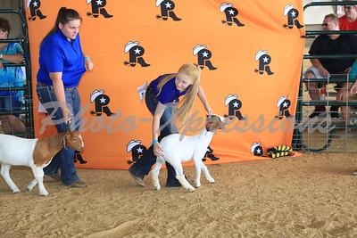 Goat Show _ Saturday 07/29
