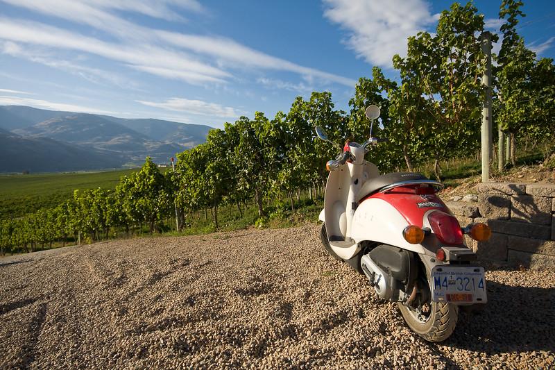 Vineyard Scooter