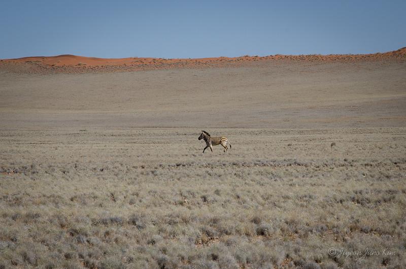 Namibia-4167.jpg