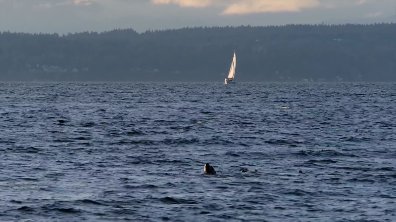 Golden Gardens Seals