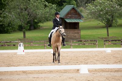 Horse 410
