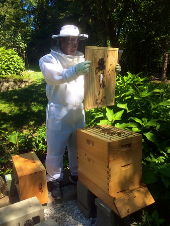 Late August 2016 Bee Hive Review
