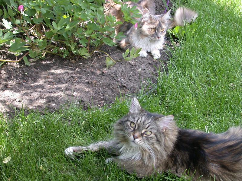 Kezia & Calliope