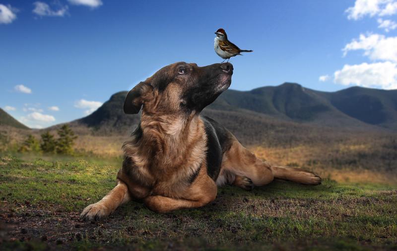 dog-b2.jpg