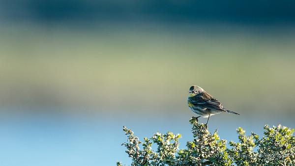 Las Gallinas Birds