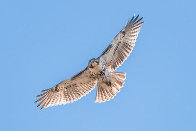 Raptors - Eagles | Hawks | Owls
