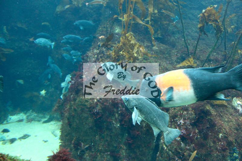 Aquarium 20130.jpg