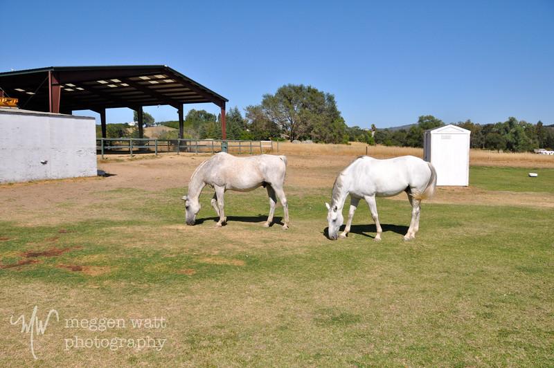 EB&Horses-056.jpg