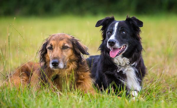 Cassie & Buddie